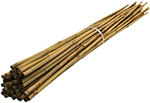 BAMBOO 8FT (24-26MM, HEIGHT: 240CM)